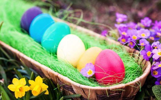 Обои Разноцветные пасхальные яйца в корзинке в окружении цветов