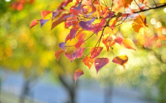 Обои Ветка с листьями в макросъемке