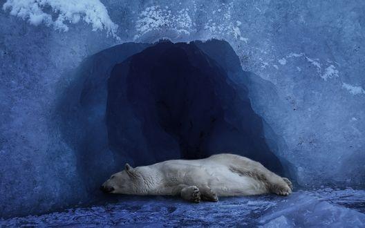 Обои Белый медведь спит в ледяной пещере
