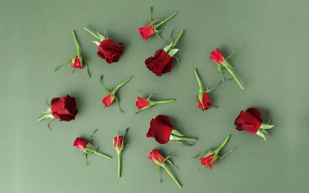 картинки разбросаны розы эти деревья