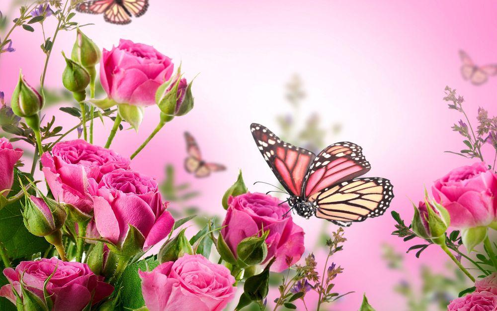 Открытки цветов для рабочего стола