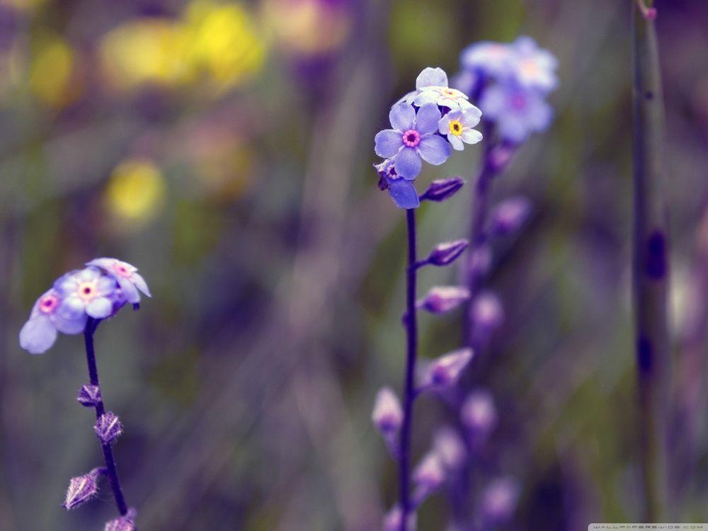Фиолетовые маленькие цветы