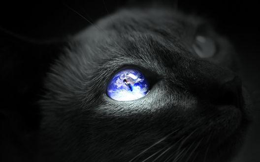 Обои Кот с отражающимся небом в одном глазу