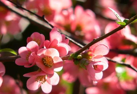 Обои Весенние цветущие ветки, ву Yaniel Cepero
