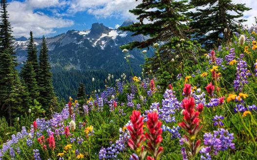Обои Полевые цветы на фоне гор и деревьев под голубым небом и белыми облаками