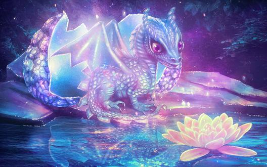 Обои Вылупившийся из яйца дракон сидит возле цветка лотоса