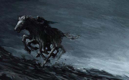 Обои Мужчина верхом на черной лошади