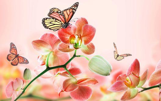 Обои Бабочки на цветах орхидеи