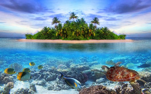 Обои Черепаха и рыбы плавают в воде на фоне острова