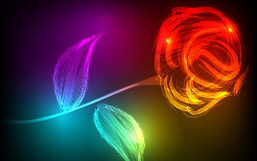 Обои Абстракция разноцветной розы