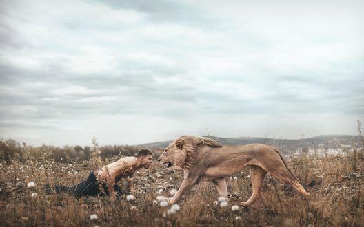 Обои Мужчина и лев рычат друг на друга в поле