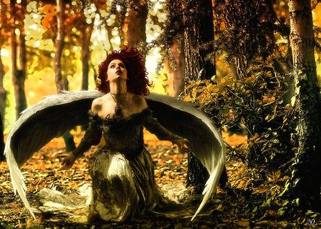 Обои Девушка - ангел в осеннем лесу, художник DanijelN88