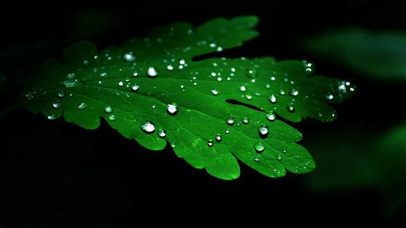 Обои Зеленый лист в каплях росы на темном фоне