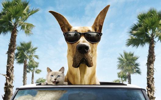 Обои Кот и собака в очках выглядывают из машины