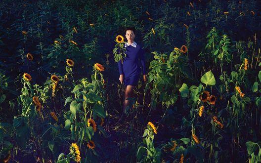 Обои Американская певица Кэти Перри / Katy Perry в синем платье среди подсолнухов