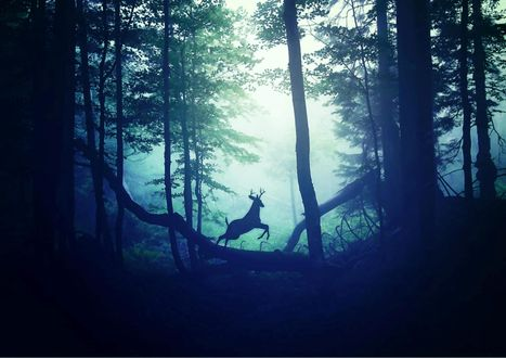Обои Олень перепрыгивает через поваленное дерево в туманном лесу, ву Nikita Gill