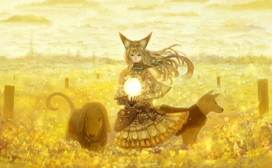 Обои Девушка с ушками и с волшебным шаром, стоит в желтых цветах, рядом с ней собаки, художник Sakimori
