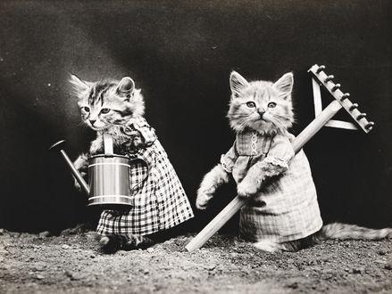 Обои Два котенка в платьях с лейкой и граблями
