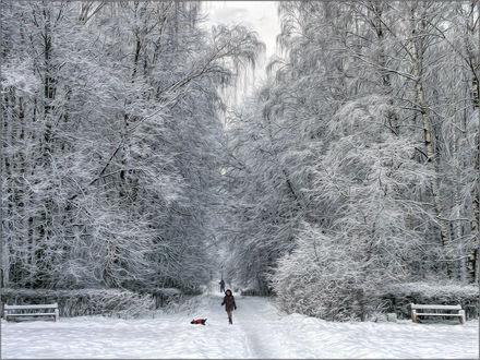 Обои Девушка, гуляющая с собакой по заснеженному парку
