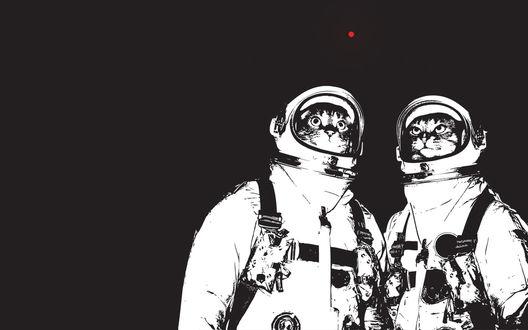 Обои Два кота космонавта смотрят на луну