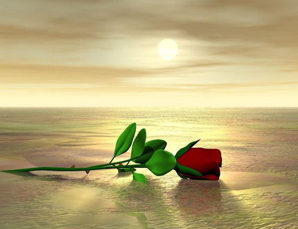 Обои Красная роза, лежащая на водной поверхности на фоне неба, покрытого легкой туманной дымкой