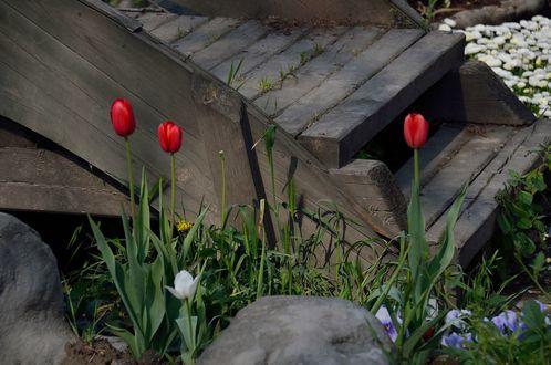 Обои Тюльпаны и другие цветы у деревянного порога, by KILUncle