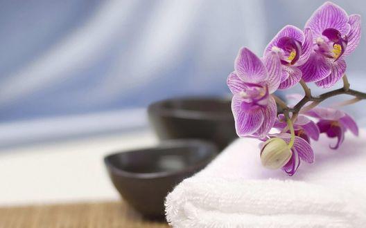 Обои Букет фиолетовых цветов