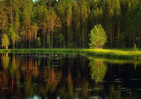 Участок озеро лес река