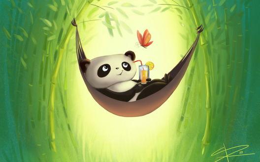 Обои Панда, сидящая в гамаке, привязанным к веткам бамбука, держащего в лапах стакан с прохладительным напитком, порхающей над головой бабочкой
