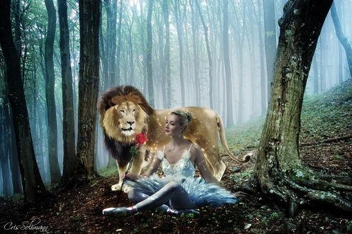 Обои Девушка в балетной пачке, держащая в руке алую розу, сидящая между деревьев рядом с львом