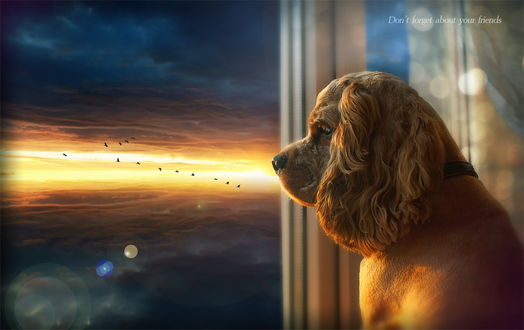 Обои Собака, сидящая в проеме окна наблюдает за стаей птиц парящих в небе на фоне вечернего небосклона с темными облаками и желтой полоской заката (Dont forget about your Frends / Не забывайте о друзьях)