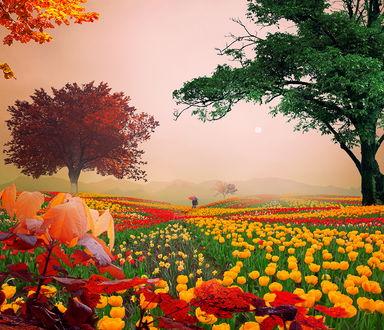 Обои Человек с зонтиком над головой стоит на поле среди разноцветных тюльпанов в окружении деревьев с красной и зеленой листвой, автор Garas Ionut