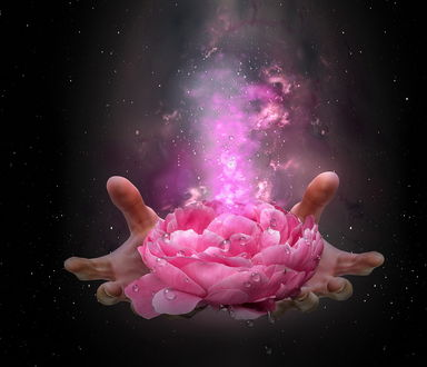 Обои На ладони лежит розовый цветок пиона в капельках воды с исходящим от него испарением, автор Nataliorion