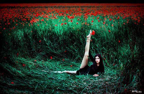 Обои Черноволосая девушка, лежащая на траве, подняла ногу вверх с зажатым между пальцами алым маком на фоне огромного макового поля, автор Мария Казьмина