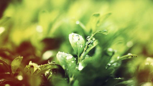 Обои Листья растения в каплях воды