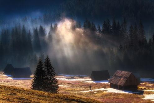 Обои Солнечные лучи сквозь густую зелень хвойных деревьев осветили небольшую опушку со стоящими на ней деревянными домиками, идущим к ним человеком
