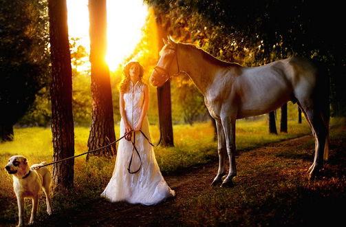 Обои Светловолосая, стройная девушка в белом, длинном платье, держащая на поводке собаку, стоящая рядом со статным конем в ослепительных лучах полуденного солнца