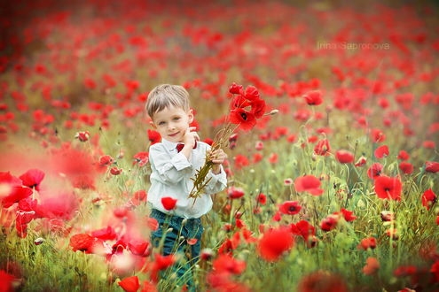 Обои Милый, светловолосый мальчик в белой рубашке с красной бабочкой, находящийся в поле с алыми маками, автор Ирина Сапронова