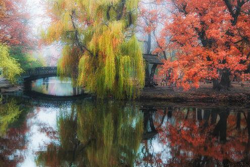 Обои Плакучая ива, растущая на берегу водоема возле дугообразного, пешеходного моста в красивом, осеннем парке, автор Антон Садомов