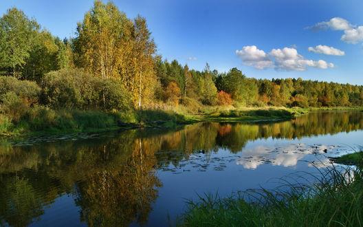 Обои Небольшой пруд в лесу, в зеркальной поверхности которого отражаются деревья с осенней листвой на фоне голубого неба c белыми облаками