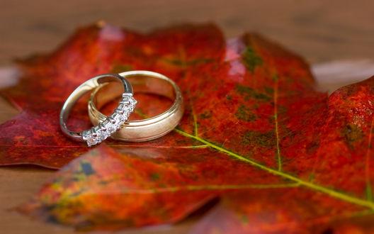 Обои Кольца на осеннем листе