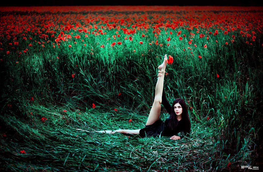 Обои для рабочего стола Черноволосая девушка, лежащая на траве, подняла ногу вверх с зажатым между пальцами алым маком на фоне огромного макового поля, автор Мария Казьмина