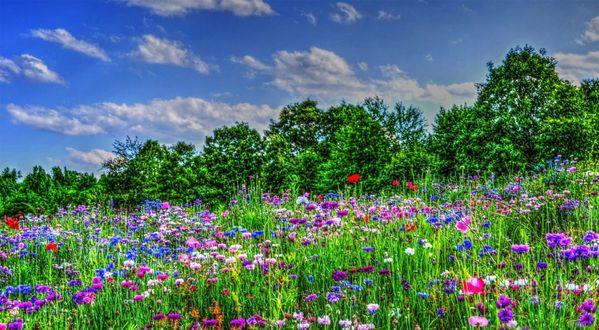 Красота растений летом 226