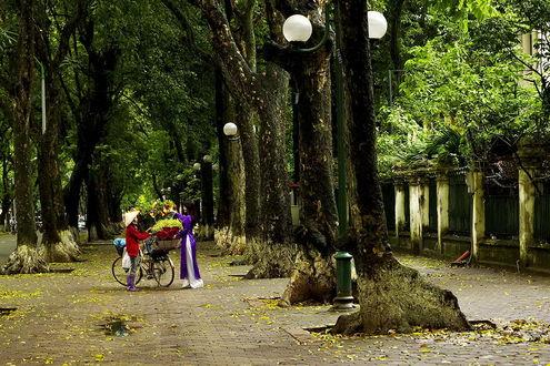 Обои Пожилая женщина азиатской внешности передает букеты цветов, находящихся у нее в корзинах на велосипеде, продавцу цветочного магазина на аллее вблизи городского парка