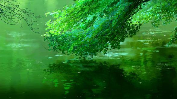 Обои Ветка над водой, кадр из аниме Сад изящных слов / Koto no ha no niwa