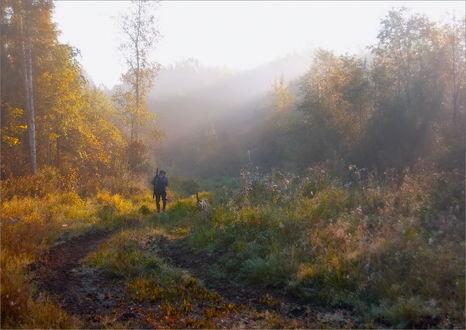 Обои Мужчина с охотничьим ружьем за спиной, идущий по грунтовой дороге вдоль лесопосадки на рассвете на фоне утреннего небосклона с легким туманом, солнечных лучей, проходящих через листву деревьев, рядом с ним по колее бежит собака