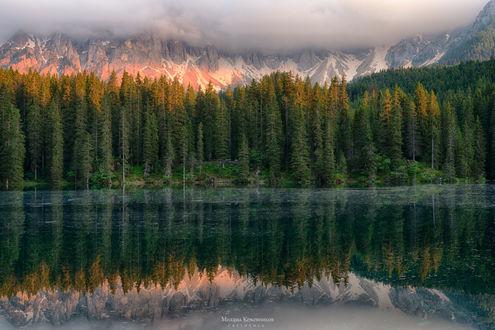 Обои Берег горного озера с растущими на нем стройными, высокими еловыми деревьями на фоне красивого, горного образования, с вершинами, покрытыми снегом, автор Михаил Кожевников