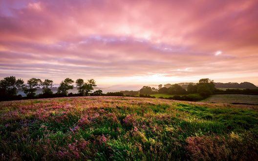 Обои Поле с цветами и небо, окрашенное закатом в розовый цвет, Иклшем, Сассекс, Англия / Icklesham, Sussex, England, фотограф Joe Daniel Price