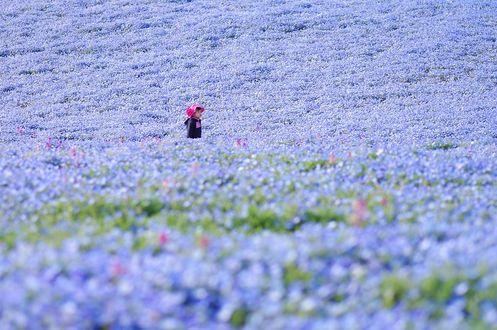 Обои Девочка на поляне, заполненной голубыми цветами