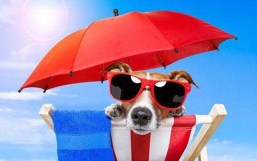 Обои Пес в красных очках лежит в шезлонге под красным зонтом